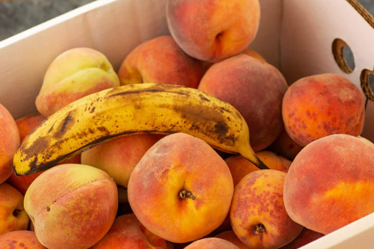 A box of fresh peaches with a banana to ripen.
