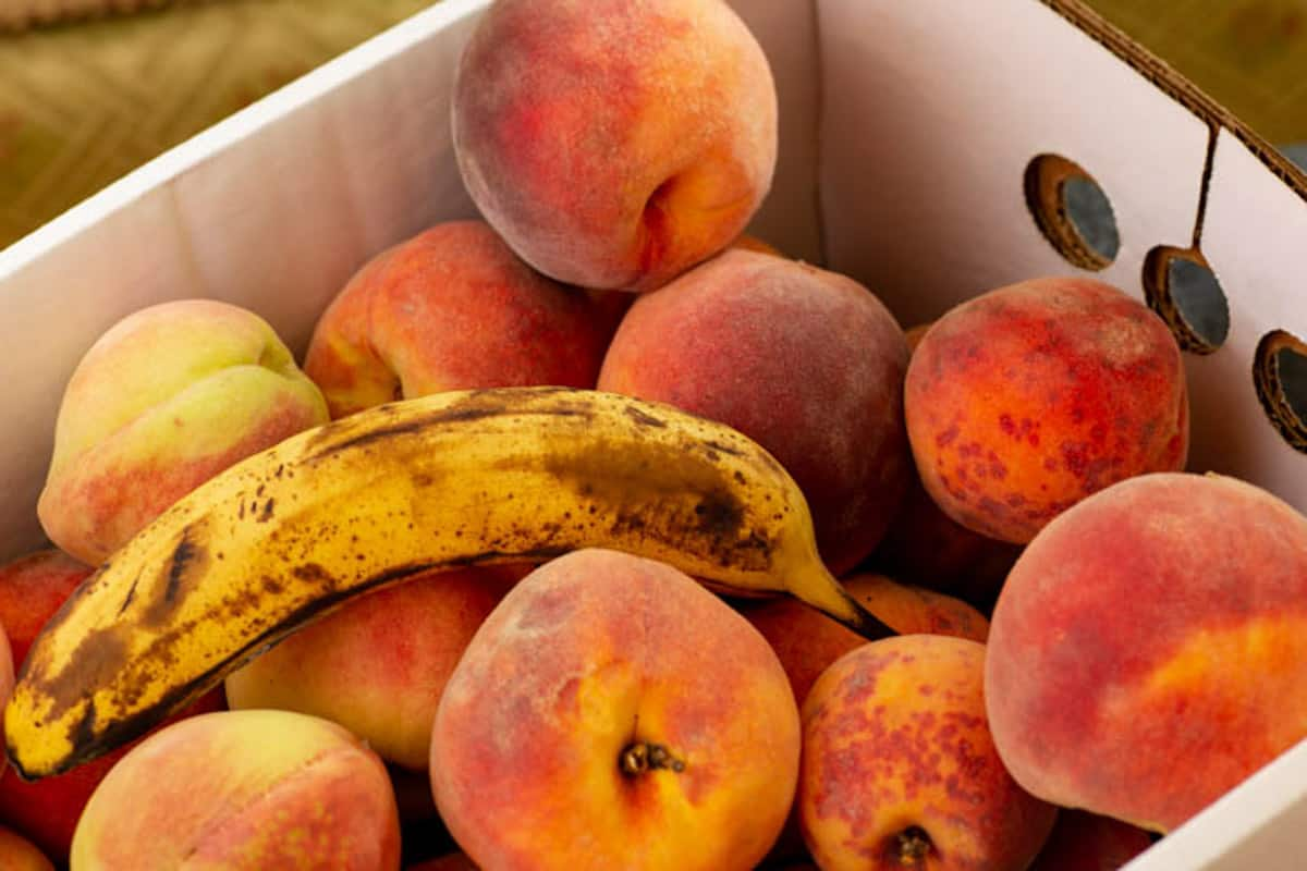 A box of peaches with a ripe banana inside.